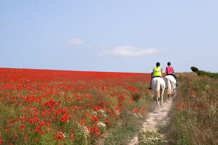 horse riding south downs sussex
