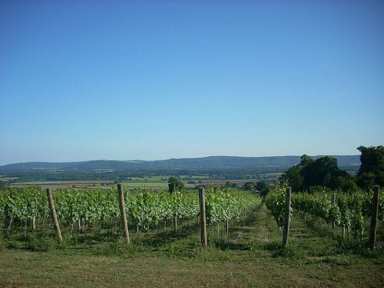 Vineyards and Wine Tours