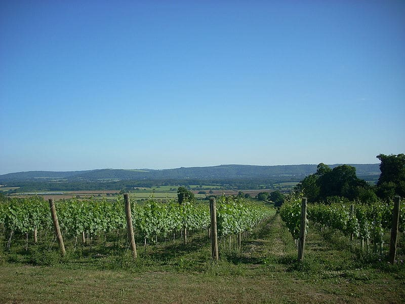 upperton vineyard sussex