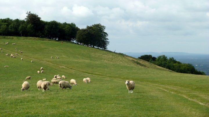 Chanctonbury-Ring-South-Downs-Way-Sussex