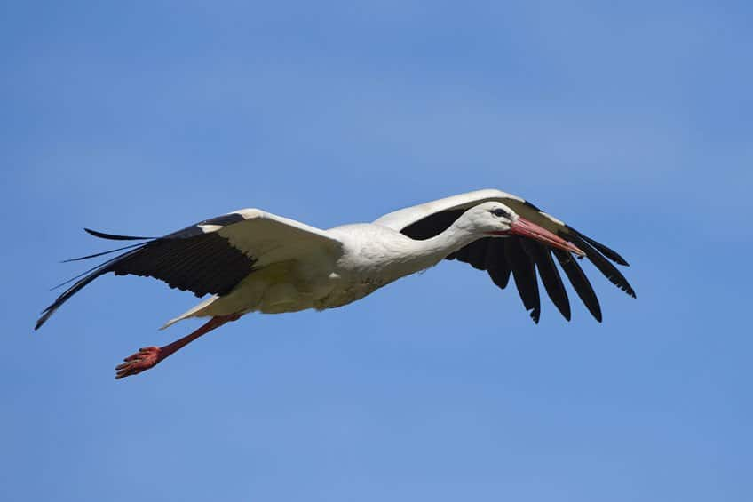 white stork knebb estate