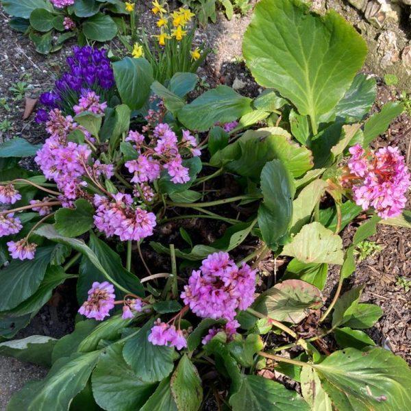 Spring Flowers at Rosebud Holiday Cottage